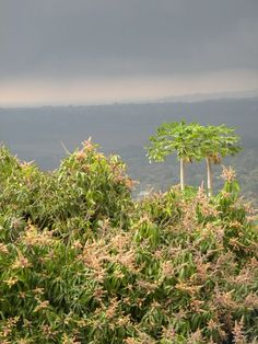 Approaching storm, view from a mountain off Entebbe Road in Uganda Uganda, Mountain, Country, Pictures, Plants, Travel, Beautiful, Photos, Viajes
