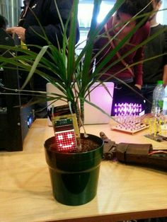 Keep plants smiling :-)     http://www.instructables.com/id/Make-your-plant-smile