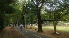 タケノコ公園