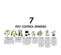 Garden pest remedies