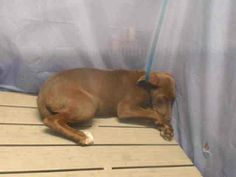 XXX URGENT/MEGA CODE RED!!!!!!!!!!!   ***Orange County Animal Services in Orlando, Fl.***  OMG!!! JUST TAKE A LOOK AT THIS POOR SCARED 4 MONTH OLD FUR-BABY!!!!   This poor babygirl is on the KILL LIST for Wed. 4/9!!!!!!!!!  PLZZZZ DO SOMETHING TO HELP TO SAVE HER PRECIOUS LIFE IN TIME!!!!!!!    PLEASE Share / Pledge / Adopt / Foster / Rescue   Animal ID: A288101 Room No.: WD65 https://www.facebook.com/photo.php?fbid=774144289265128&set=a.574379862574906.1073741825.100000086916791&type=1