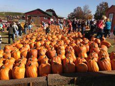 Carter Mountain Orchard in Charlottesville, VA Charlottesville Va, Apple Orchard, Fun Activities For Kids, Cocktail Recipes, Travel Ideas, Apples, Virginia, Mountain, Pumpkin