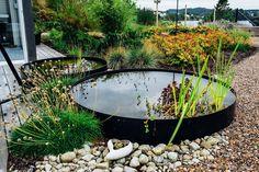 Water Garden, Garden Plants, House Plants, Water Element, Landscape Design, Garden Design, Coastal Gardens, Garden Oasis, Small Ponds