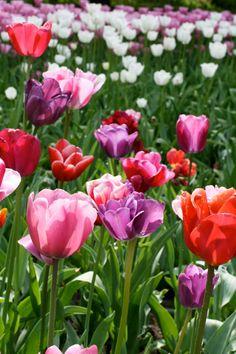 Spring:)