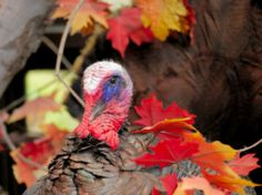 Have a Local Thanksgiving This Year http://www.isfoundation.com/news/have-local-thanksgiving-year