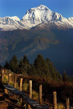 Dhaulagiri (8167 m), seen from Poon Hill, Nepal (by Dietmar Temps).