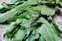 The Most Mexican of Cooking Herbs: Epazote