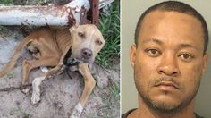 Justice for Bella, Florida dog severely neglected by heartless owner! | YouSignAnimals.org