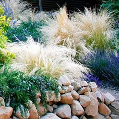 Rain and snow are going to play a huge part in your yard landscaping decisions. For example you will have to plan for your yard landscaping with care. These yard lan Low Water Landscaping, Shade Landscaping, Landscaping With Rocks, Front Yard Landscaping, Backyard Landscaping, Landscaping Ideas, Modern Landscaping, Front Yard Decor, Front Yard Design