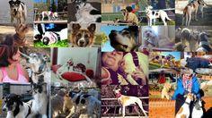 2014 ha sido benévolo conmigo. Mucho esfuerzo por encontrar trabajo, muchas personas pidiendo ayuda para ellos y sus perros, algunos de ellos decidieron esforzarse por ayudar a su peludo, muchos ot...