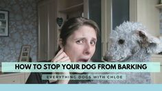 HOW TO STOP MY DOG FROM BARKING AT EVERYTHING Dog Barking Video, Everything, Your Dog, Pets, Animals And Pets