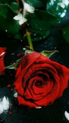 Beautiful Flowers Wallpapers, Beautiful Rose Flowers, Love Flowers, Rose Flower Wallpaper, Flowers Gif, Gulab Flower, Rosas Gif, Messages Bonjour, Happy New Year Animation
