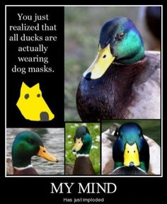 Funny commercials You just realized that all ducks are actually wearing dog masks. Thailand Coffee Funny TV ad tvc commercial part 2 of 3 - . Haha Funny, Funny Cute, Funny Stuff, Funny Ads, Funny Things, That's Hilarious, 21 Things, Crazy Funny, Crazy Dog