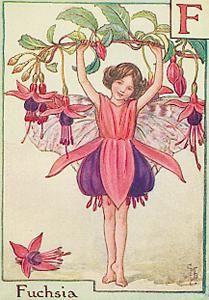 (花) フクシア : メルボルン便り