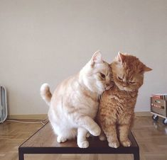 10 Pictures Of Extremely Lovey-Dovey Cats That Will Melt Your Heart - World's largest collection of cat memes and other animals Cute Cats And Kittens, I Love Cats, Kittens Cutest, Cute Baby Animals, Animals And Pets, Funny Animals, Cute Baby Cats, Gatos Cats, Cat Aesthetic