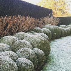 garden in winter | Paul Bangay ... cloud pruning looks great in winter providing interesting shape in the garden
