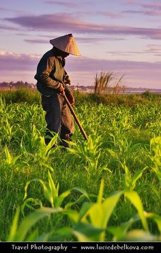 Laotian Farmer