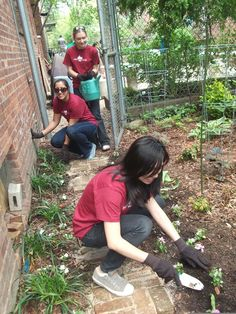 P4aC team planting a garden at Brooklyn Community Housing and Services in Greenpoint
