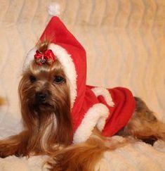 In Hundepullover Bilder Von Die 19 2019 Besten rQdeWBCox