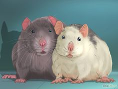 Bildtitel Care for a Pet Rat Step 5