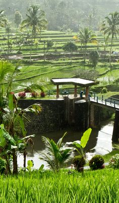 Rice cultivation in Bali, Indonesia