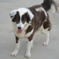 Pertti 💚 29.5.2017 OneVet Clinica Veterinaria on romanialainen eläinklinikka, joka ylläpitää koiratarhaa Cosoban kylässä. Loppuvuodesta 2015 eräs saksalaisnainen päätti tyhjentää kokonaisen kunnallisen tarhan, joissa olot olivat kaikin puolin epäinhimilliset. Hän toimitti kaikki tarhan koirat, noin viisikymmentä, OneVetin Cosoban tarhalle. Sitten hän…Lue lisää ›