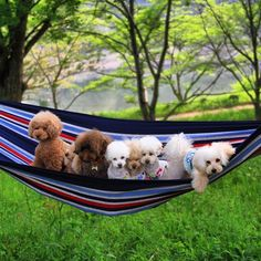 When a group of adorable puppies go on a camping trip, the result is a whole lot of unbearable cuteness.