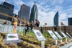 TELUS recently unveiled the 1st urban corporate community food garden, which has been created on the 5th floor roof terrace of it's Toronto office tower.  Check out the video recap of the launch!
