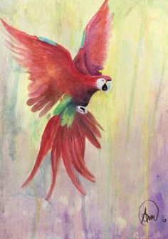 Water colour macaw on 11x14