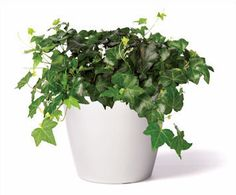 Best Indoor Plants For Your Apartment-From the Arcadia Run blog