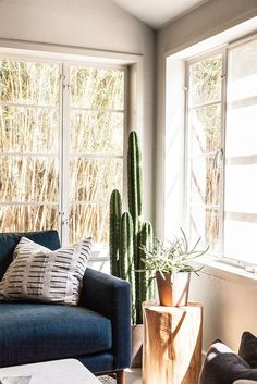 Sunny corner with tall cactus and succulent plant on wooden stump.