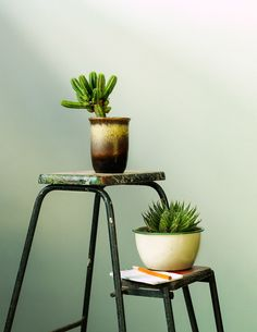 Georgina Reid, founder and editor of The Planthunter. Photo – Daniel Shipp on thedesignfiles.net