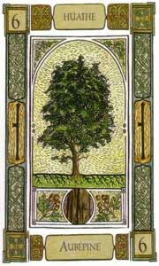 """From The Celtic Oracle Deck,""""Hawthorn"""" Ogham: Huath. Purify and protect; is described as telling you,You will pass through a necessary but restricting phase. Things associated with the preparation of a new prosperous period. Meditation is favoured in order to purify your personal environment."""