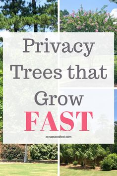 Front Yard Landscaping Fast Growing Trees for Privacy and Shade - Fast growing privacy trees that'll provide years of shade and privacy and don't take decades to grow! Invest in these now and enjoy your yard again!