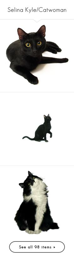 In my (cat) eyes Halloween black cat, Charlotte olympia and Cat - halloween decorations black cat