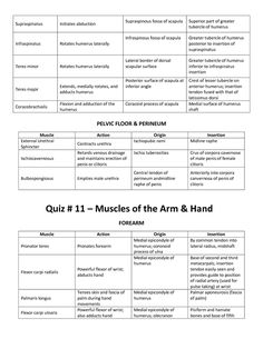 Muscle List Action Origin Insertion Mrs Smutz