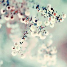 midwinter daydream by alice b. gardens, via Flickr