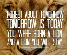 You were born a lion and a lion you will stay