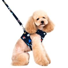 JAYP Pet Grid Cartoon Vest Training Harness Leash Set *** Details can be found by clicking on the image. (This is an affiliate link and I receive a commission for the sales)