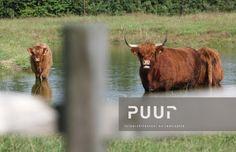 Beste afbeeldingen van puur groenprojecten belgië