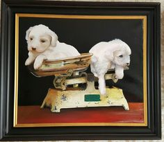 Puppies in balance