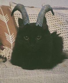 It's a black cat with horns 😍 Little demon Animal Original, Funny Animals, Cute Animals, Japon Illustration, Cat Aesthetic, Kawaii, Cat Memes, Cat Lady, Cute Cats