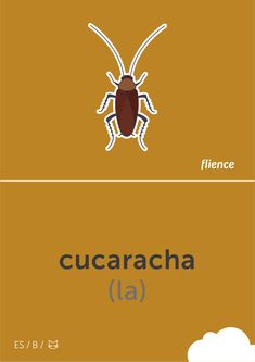 Cucaracha #flience #animal #insects #english #education #flashcard #language