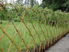 Живая изгородь в дизайне сада, фото