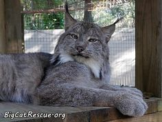"""Gilligan says, """"I am NOT coming over there UNLESS you have treats!"""""""