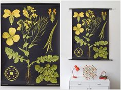 Vintage botanical pull down chart / school map with canola theme. The illustration itself was created by painter and biology professor Gottlieb Vintage Botanical Prints, Vintage Prints, Vintage Posters, Canola Flower, Chart School, Flower Chart, School Posters, Vintage School, Kids Room Art