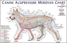 Canine Acupuncture. wish we could do. very helpful. very effective. find a vet that does it!