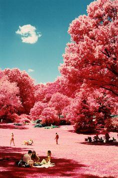 Kodak EIR Infrared Landscapes by Aldo Rafael... - very cool