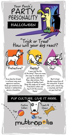 What's your pup's party personality? Use these tips and tricks to keep your pup happy this Halloween.