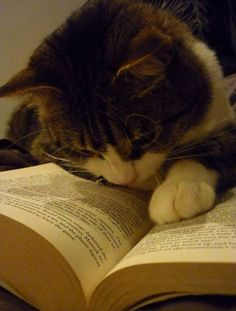Funny Cat Reading a Book Funny Cats, Funny Animals, Cute Animals, Baby Animals, Crazy Cat Lady, Crazy Cats, I Love Cats, Cool Cats, Kittens Cutest